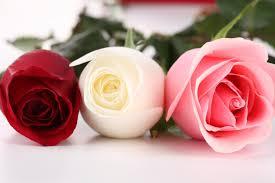 Roses pour deuil