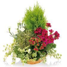 Variétés de plantes de deuil